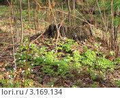 Пень в весенний день. Стоковое фото, фотограф Литвинова Евгения / Фотобанк Лори
