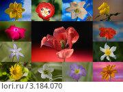 Летние цветы, коллаж. Стоковое фото, фотограф Виктор Зандер / Фотобанк Лори