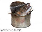 Голова лосося торчит из открой банки. Стоковое фото, фотограф Владимир Арефьев / Фотобанк Лори