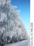 Купить «Березы в инее вдоль дороги», фото № 3190326, снято 3 января 2012 г. (c) Михаил Коханчиков / Фотобанк Лори