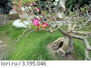 Цветы на дереве в Тайланде (2011 год). Стоковое фото, фотограф Диана Карлова / Фотобанк Лори