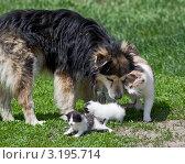 Кошка с собакой нежатся на солнце. Стоковое фото, фотограф Нина Ефремова / Фотобанк Лори
