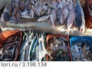 Купить «Прилавок со свежей рыбой, лежащей на льду, на рыбном базаре», фото № 3198134, снято 28 декабря 2011 г. (c) Яков Филимонов / Фотобанк Лори