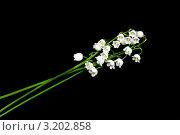 Купить «Лесной Ландыш», фото № 3202858, снято 12 июня 2011 г. (c) ElenArt / Фотобанк Лори