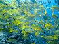 Стая рыб, фото № 3206374, снято 26 ноября 2006 г. (c) Татьяна Белова / Фотобанк Лори