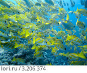 Стая рыб. Стоковое фото, фотограф Татьяна Белова / Фотобанк Лори