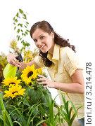 Купить «Радостная шатенка опрыскивает подсолнухи из пульверизатора», фото № 3214478, снято 1 мая 2010 г. (c) CandyBox Images / Фотобанк Лори