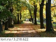 Осенний пейзаж. Аллея в парке. Стоковое фото, фотограф Роман Львов / Фотобанк Лори