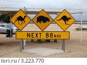 Купить «Австралийский дорожный знак», фото № 3223770, снято 28 марта 2010 г. (c) Daniil Nasonov / Фотобанк Лори