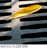 Лист на колодце. Стоковое фото, фотограф Олеся Довженко / Фотобанк Лори