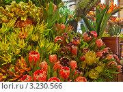 Купить «Экзотические цветы - орхидеи, протеи и стрелиции на цветочном рынке в Фуншале», фото № 3230566, снято 27 декабря 2011 г. (c) Виктория Катьянова / Фотобанк Лори