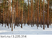 Купить «Сосновый лес зимой», фото № 3235314, снято 28 февраля 2011 г. (c) Яков Филимонов / Фотобанк Лори
