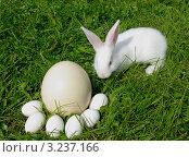 Кролик и яйца в зеленой траве. Стоковое фото, фотограф GPeshkova / Фотобанк Лори