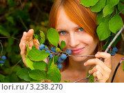 Купить «Девушка собирает терн», фото № 3238270, снято 31 августа 2011 г. (c) Елена Алексеева / Фотобанк Лори