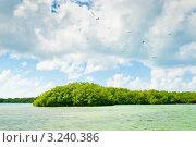 Купить «Мангровые заросли. Карибское море. Доминикана», фото № 3240386, снято 4 января 2010 г. (c) Екатерина Овсянникова / Фотобанк Лори