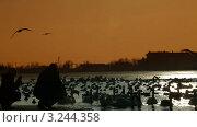 Купить «Люди кормят перелетных птиц», видеоролик № 3244358, снято 11 февраля 2012 г. (c) Владимир Никулин / Фотобанк Лори