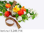 Купить «Фон из цветущей ветки яблони с тюльпанами, перевязанные Георгиевской лентой», фото № 3249714, снято 25 февраля 2020 г. (c) Светлана Кузнецова / Фотобанк Лори