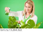 Купить «Молодая блондинка опрыскивает водой растение в офисе с зелеными стенами», фото № 3264322, снято 24 ноября 2011 г. (c) CandyBox Images / Фотобанк Лори