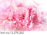 Купить «Цветущая сакура», фото № 3279262, снято 4 апреля 2020 г. (c) Sergey Borisov / Фотобанк Лори