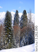 Купить «Красивый горный пейзаж с заснеженными пихтами в окрестностях Сочи», фото № 3282890, снято 17 февраля 2012 г. (c) Анна Мартынова / Фотобанк Лори
