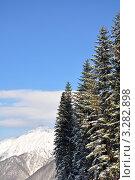 Купить «Заснеженные пихты на фоне гор», фото № 3282898, снято 17 февраля 2012 г. (c) Анна Мартынова / Фотобанк Лори