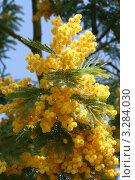 Купить «Запах весны», фото № 3284030, снято 10 апреля 2011 г. (c) Екатерина Рыбникова / Фотобанк Лори