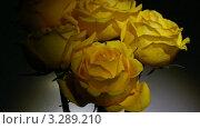 Купить «Букет желтых роз», видеоролик № 3289210, снято 24 февраля 2012 г. (c) Михаил Коханчиков / Фотобанк Лори