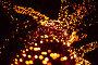 Ветви дерева в огнях иллюминации, фото № 3300330, снято 4 января 2011 г. (c) Losevsky Pavel / Фотобанк Лори