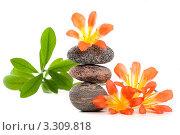 Пирамида из камней для СПА с яркими цветами на белом фоне. Стоковое фото, фотограф Константин Сидоров / Фотобанк Лори