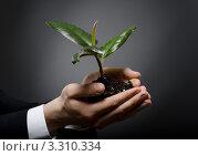 Росток фикуса в руках у бизнесмена. Стоковое фото, фотограф Алексей Многосмыслов / Фотобанк Лори