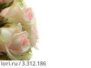 Розы в букете. Стоковое фото, фотограф Алла Ушакова / Фотобанк Лори