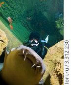 Купить «Петербургский океанариум. Дайвер и усатая акула-нянька (Nurse shark / Ginglymostoma cirratum)», фото № 3312230, снято 29 октября 2011 г. (c) Сергей Дубров / Фотобанк Лори