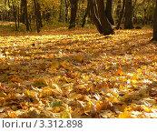 Опавшие листья клёна. Стоковое фото, фотограф Полухин Сергей / Фотобанк Лори