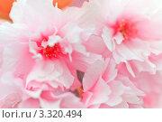 Купить «Цветущая сакура крупным планом», фото № 3320494, снято 4 апреля 2020 г. (c) Sergey Borisov / Фотобанк Лори