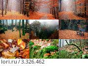 Купить «Коллаж из фотографий лесных и горных пейзажей осенью», фото № 3326462, снято 19 июля 2019 г. (c) Елена Ковалева / Фотобанк Лори