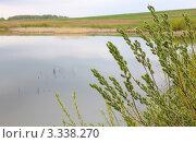 Ветви кустов. Стоковое фото, фотограф UladzimiR / Фотобанк Лори