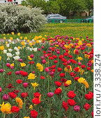 Городской пейзаж с яркими тюльпанами. Стоковое фото, фотограф UladzimiR / Фотобанк Лори