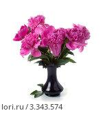 Розовые пионы в вазе. Стоковое фото, фотограф Елена Блохина / Фотобанк Лори