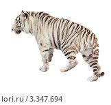Купить «Белый тигр», фото № 3347694, снято 3 марта 2012 г. (c) Яков Филимонов / Фотобанк Лори