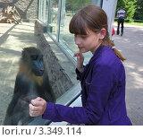 Купить «Девочка общается с обезьяной мандрил», фото № 3349114, снято 27 июня 2011 г. (c) Александр Тараканов / Фотобанк Лори