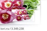 Рекурсивная открытка с тюльпанами, фото № 3349238, снято 21 июля 2017 г. (c) Liseykina / Фотобанк Лори