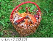 Купить «Корзина с грибами», эксклюзивное фото № 3353838, снято 29 июля 2008 г. (c) Алёшина Оксана / Фотобанк Лори