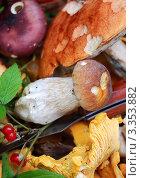 Купить «Грибы», эксклюзивное фото № 3353882, снято 29 июля 2008 г. (c) Алёшина Оксана / Фотобанк Лори