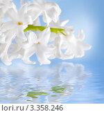 Купить «Цветок Гиацинт с каплями воды, фон для открытки», фото № 3358246, снято 3 марта 2012 г. (c) ElenArt / Фотобанк Лори