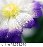 Купить «Цветок с каплями воды», фото № 3358310, снято 5 марта 2012 г. (c) ElenArt / Фотобанк Лори