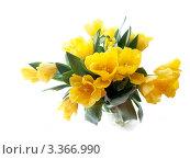 Букет из желтых тюльпанов на белом фоне, фото № 3366990, снято 8 марта 2012 г. (c) Liseykina / Фотобанк Лори