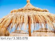 Купить «Зонтик на пляже из сухой травы. Тунис», фото № 3383078, снято 10 октября 2009 г. (c) Екатерина Овсянникова / Фотобанк Лори