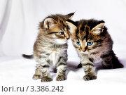 Купить «Два котенка», фото № 3386242, снято 4 декабря 2010 г. (c) Константин Лабунский / Фотобанк Лори