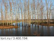 Разлив на Нерли. Стоковое фото, фотограф Елена Бодрова / Фотобанк Лори