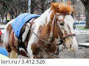 Рыжая лошадь. Стоковое фото, фотограф Мария Волочек / Фотобанк Лори